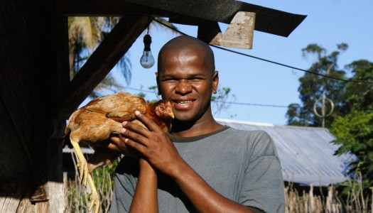 Kura też może ewangelizować