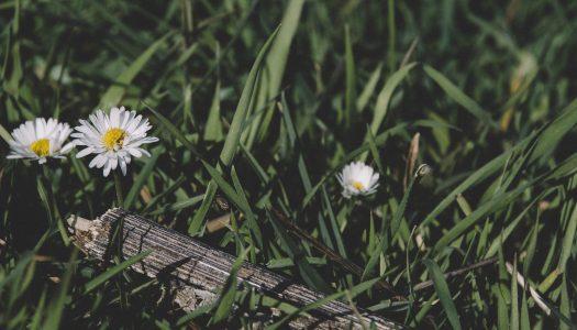 Mały Kwiatek